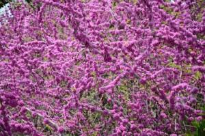 Frühling 001