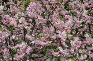 Frühling 002