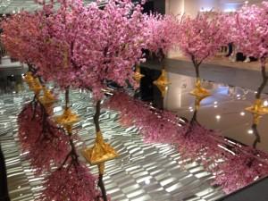 Kirschblüte im Reel