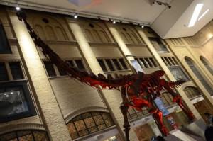 Royal Ontario Museum 02