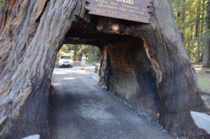 45 Chandelier Tree 3