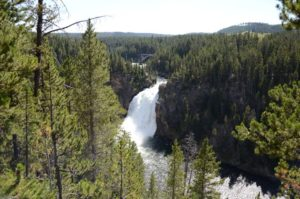 56 Yellowstone 10