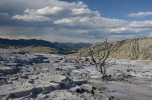 56 Yellowstone 11